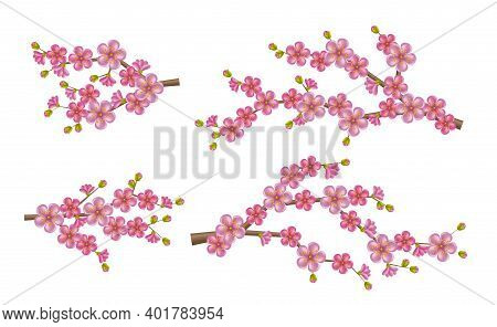 Beautiful Realistic Sacura Branch With Blooming Flowers And Buds. Spring Cherry Blossom
