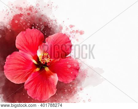 Watercolor Painting Of A Vibrant Red Hibiscus Flower. Botanical Illustration