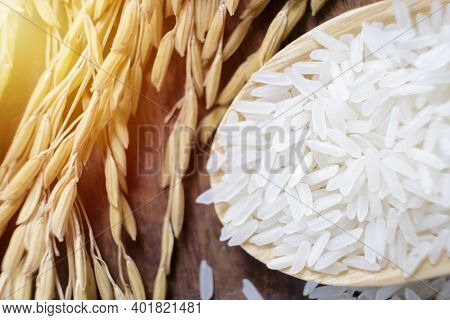 Closeup Rrice Plants With White Rice And Unmilled Rice. Organic Paddy Rice,ear Of Paddy, Ears Of Tha