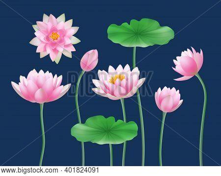 Lotus Realistic Buds. Nature Colored Flowers Yoga Symbols Decent Vector Illustrations Set. Flora Pet