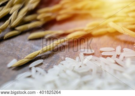 Rrice Plants With White Rice And Unmilled Rice. Organic Paddy Rice,ear Of Paddy, Ears Of Thai Jasmin