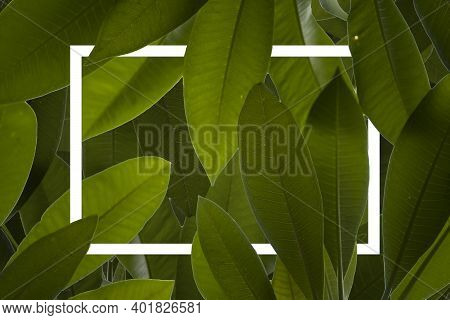 Green Leaves Pattern Background, Natural Background And Wallpaper. Creative Layout Made Of Green Lea