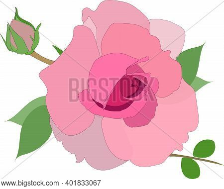 A Beautiful Dusty Pink Rose. Vector Rose. Isolated Image. Postcard With A Flower. Pastel Shades. Vec