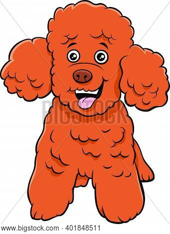 Cartoon Illustration Of Toy Or Miniature Poodle Purebred Dog Animal Character