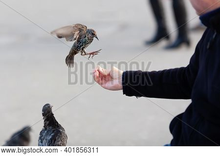 Picture Of A Man's Hand Feeding Birds In Winter