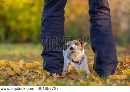 Parson Russell Terrier Seen Through The Legs Of A Man