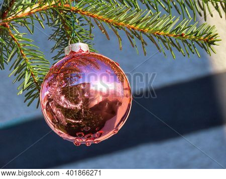 Pink Christmas Bauble Shining In Bright Sun, Green Fir Tree Branches