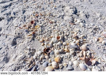 Seashells On The Beach In Florida Gulf Coast