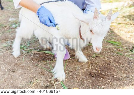 Young Veterinarian Woman With Stethoscope Holding And Examining Goat Kid On Ranch Background. Young