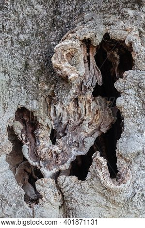 Background Texture Of An Old Gnarled Tree