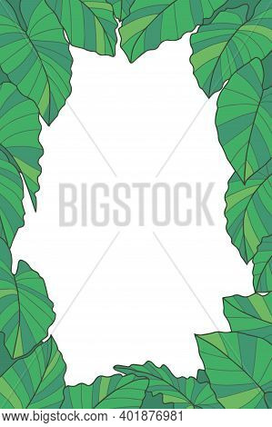 Plant Vector Frame With Green Exotic Plant With Botanic Name 'alocasia Macrorrhizos' And 'giant Taro