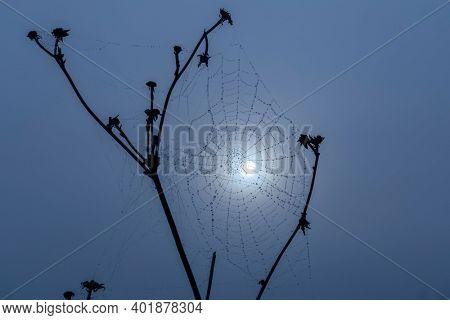 Spider web in sunrise sun