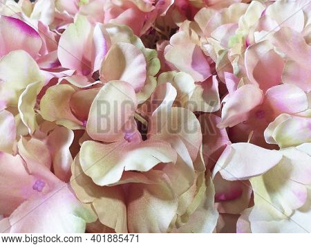 Close Up Of Natural Pink And White Flower Petals. Floral Background And Texture. Pink Flower Petals