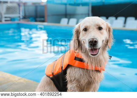 Dog Rescuer In Life Vest Near Swimming Pool Outdoors, Closeup