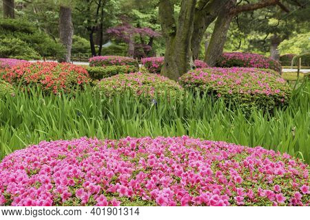 Colorful Flower In Garden In Springtime Season. Natural Background