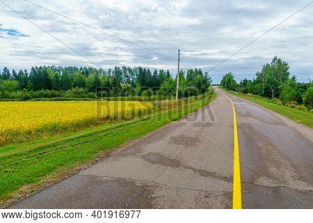 View Of Countryside And A Yellow Field Near Bideford, Prince Edward Island, Canada