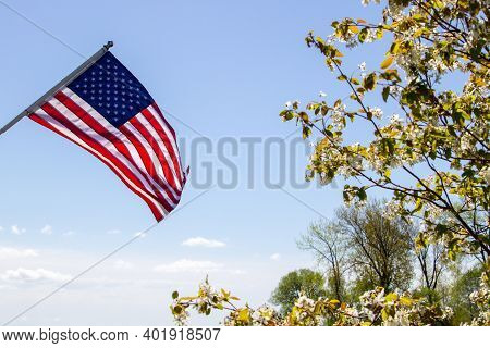 American Flag In The Spring. Sunshine On The American Flag With Spring Blossoms On A Flowering Dogwo
