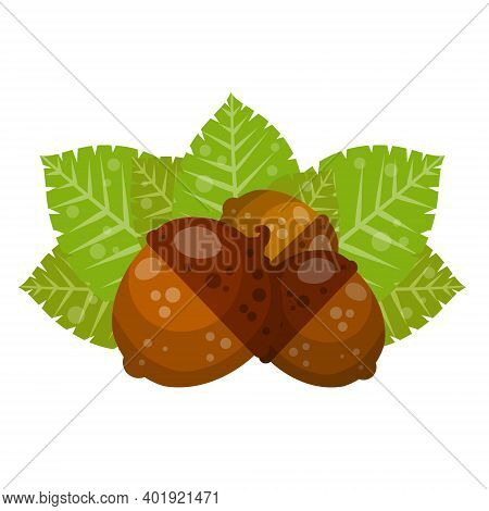 Hazelnut. Autumn Harvest Of Wood. Natural Food And A Snack In A Shell. Acorn. Brown Forest Object. F