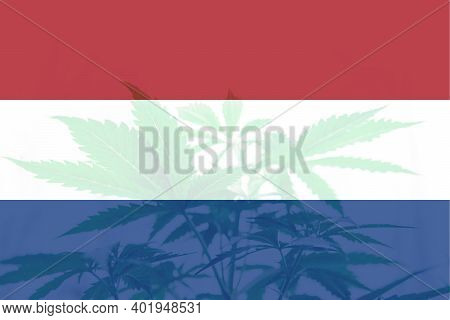 Medical Cannabis In The Netherlands. Cannabis Legalization In The Netherlands. Weed Decriminalizatio