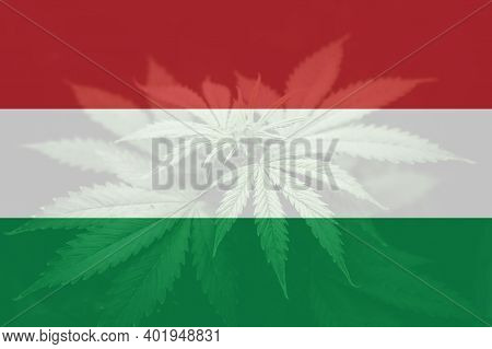 Medical Cannabis In The Hungary. Weed Decriminalization In Us. Leaf Of Cannabis Marijuana On The Fla