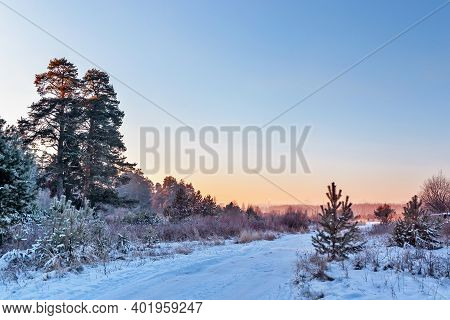 Road In A Pine Forest On A Frosty Winter Morning At Dawn
