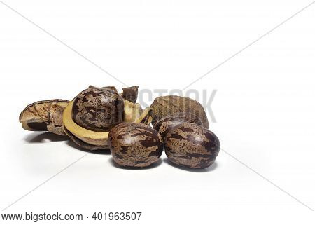 Rubber Seeds On White Background With Clipping Path.