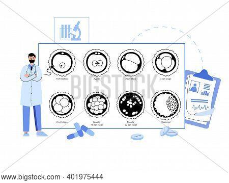 Embryo Development Diagram. Insemination Fertilization, Ivf Concept. Female And Male Egg Cell. Docto