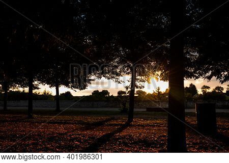 Back Light Sunset In A Park In Summer, France