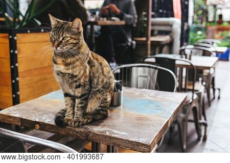 Cute Grey Cat Sitting On A Table In A Street Cafe In Istanbul, Turkey. Tabby Grey Cat.