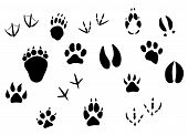 Animal footprints and tracks isolated on white for wildlife concept design poster
