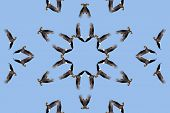 Kaleidoscopic Bald Eagle in a star shape with a blue sky background poster