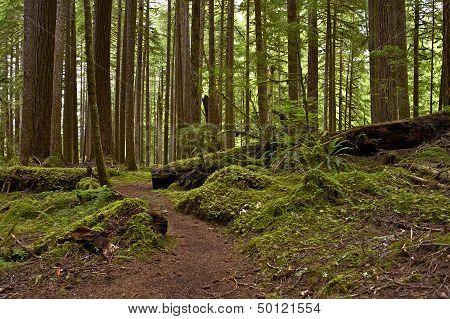 Us Northwest Rainforest