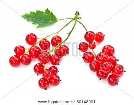 Red Currant Twig