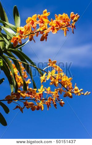 Yellow Orchids And Blue Sky
