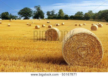 Libertad bajo fianza de heno aprovechamiento en el paisaje de campo de oro