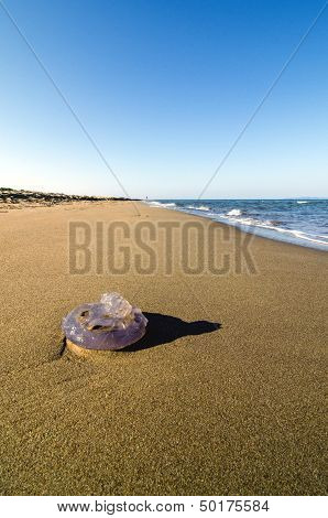 Jellyfish washed up on a sandy beach. poster