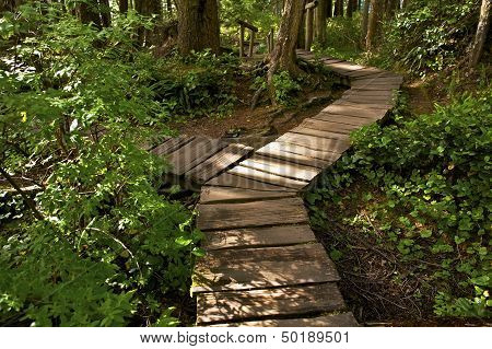 Two Ways Cross Trail. Wooden Pathway Trail in Olympic National Park. Cape Flattery Trail. Washington State USA. poster