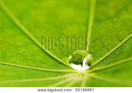 Water drop on green Nasturtium leaf macro