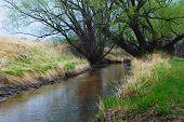 Dark water channel under tall dark trees poster