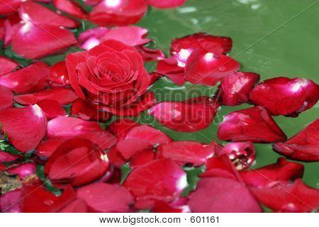 Floating Red Rose Petals