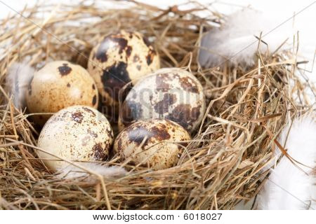 motley eggs at nest. Image ready for your design work. poster