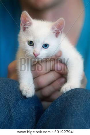 Kitten On A White Background Colored Hand Watch