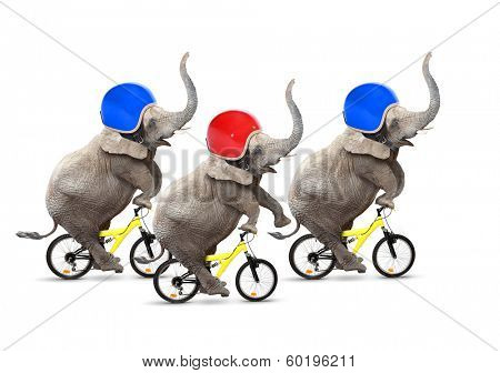 Bicycle race. Three elephants have a fun.  poster