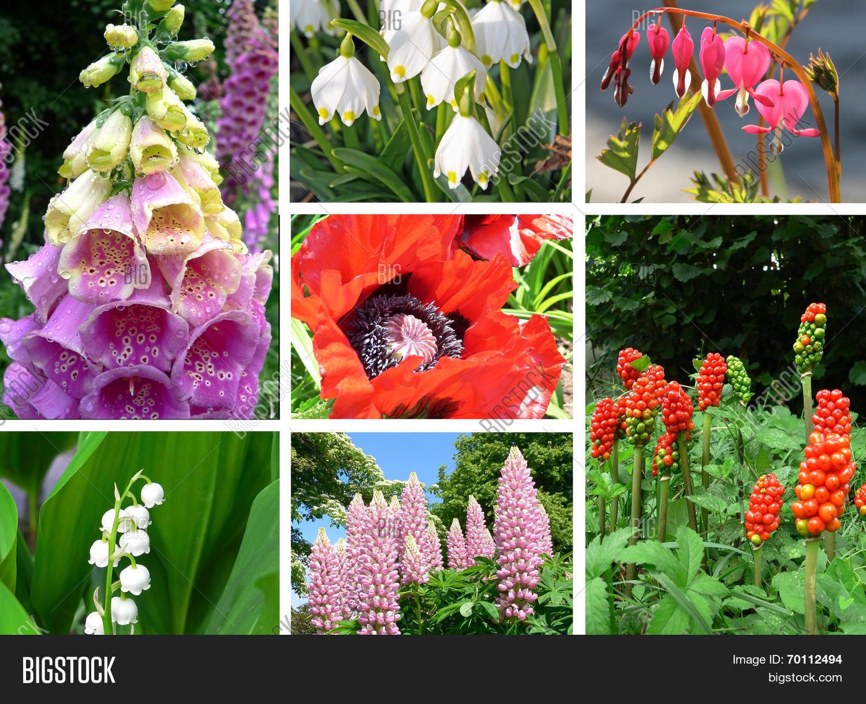 Фото ядовитых цветов с названием