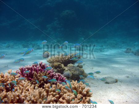 Coral Closeup With Background