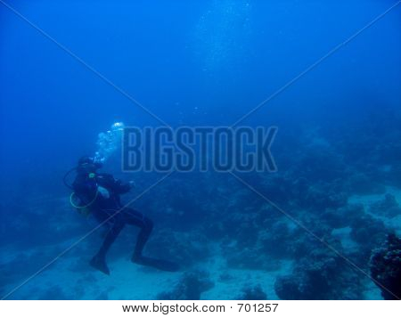 Diver In The Deep Blue