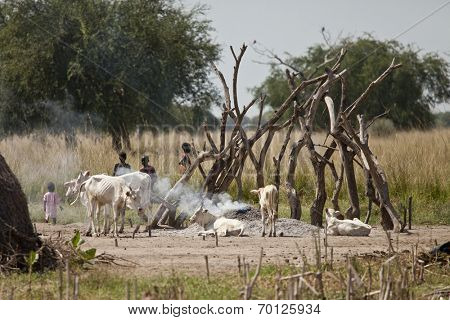 BOR, SOUTH SUDAN-DECEMBER 4 2010: Unidentified children at a cattle camp with thin cattle in South Sudan