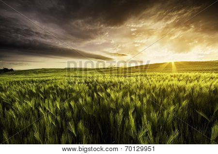 Very Atmospheric View Of A Wheat Field At Sunset With Dramatic Sky