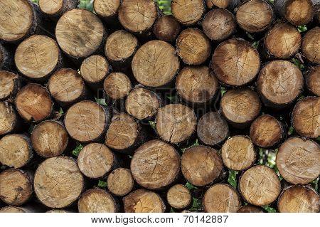 Woodpile ready for winter at Fairbanks Alaska poster