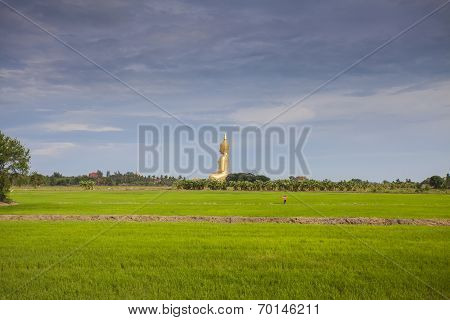 Rice Field And Wat Muang Big Buddha In Angthong Province, Thailand